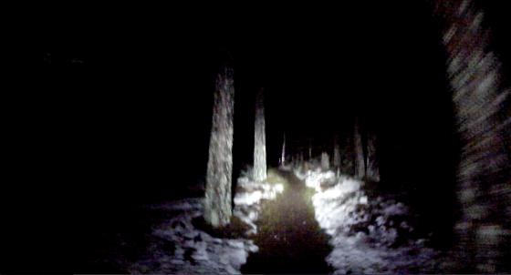 Mörkt i skogen